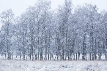 Schnee-Tag von Vince Pellegrom