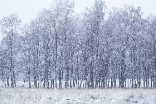 Sneeuwige Dag