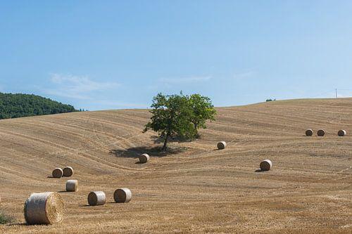 Platteland in Toscane, Italie van