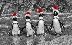 quatre pingouins se dandinant avec des chapeaux de père noël