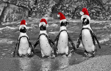 vier waggelende pinguïnen met de caps van de Kerstman