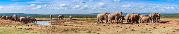 Panorama van olifantenkudde in Addo Elephant Nationaal Park van Easycopters