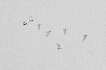 Noordse Sternen in een sneeuwbui.Zwart-wit. van Tineke Koen