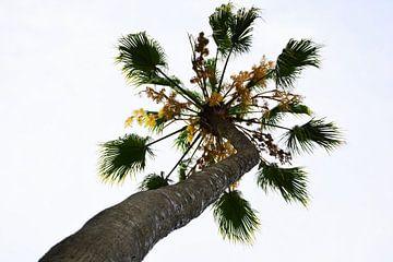 hoge palm boom von Gerrit Neuteboom
