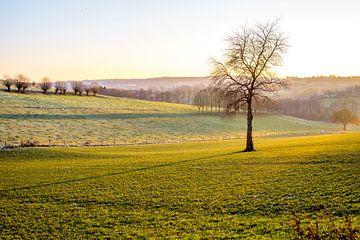 Single tree with a long shadow in a sunny winter landscape in Zuid Limburg, the Netherlands sur Hein Fleuren