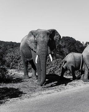 Afrikanische Elefanten-Safari 2.0 von Ian Schepers