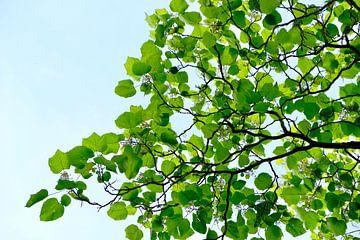 Grünes Blatt von Ingrid Meuleman
