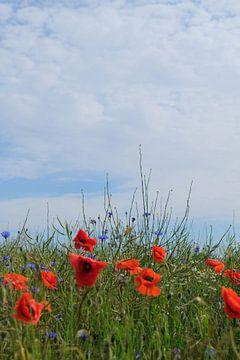 mooie zomer van Ostsee Bilder