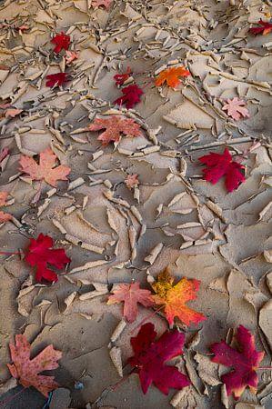Esdoorn bladeren liggend op uitgedroogde bodem van Zion National Park