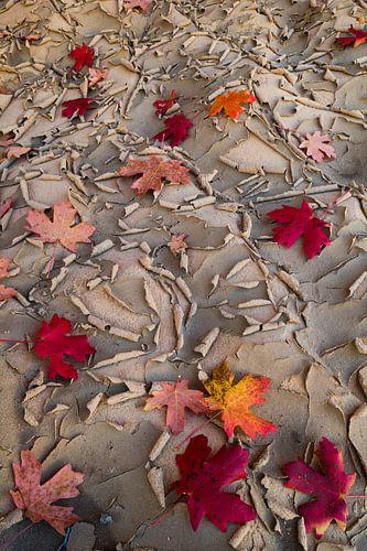 Esdoorn bladeren liggend op uitgedroogde bodem van Zion National Park van Nature in Stock