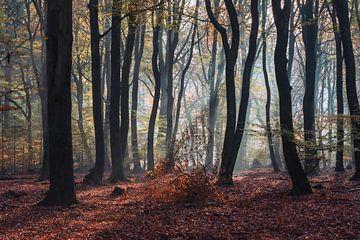 Herbst von Patrick Verheij