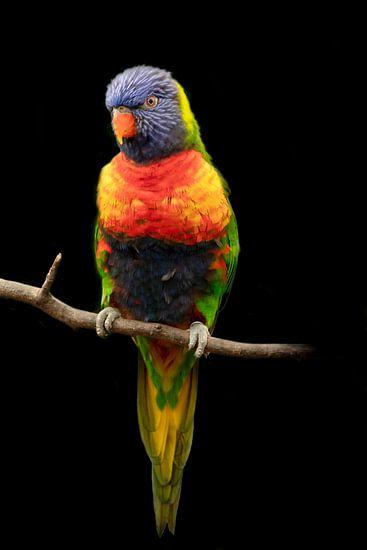 Lori, een kleine papegaaiensoort