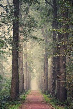 Drentse bomen laan van Emmy Bremer