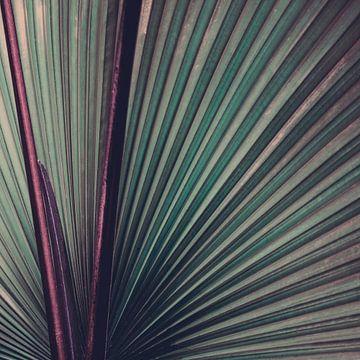 Nature Abstracted von Insolitus Fotografie