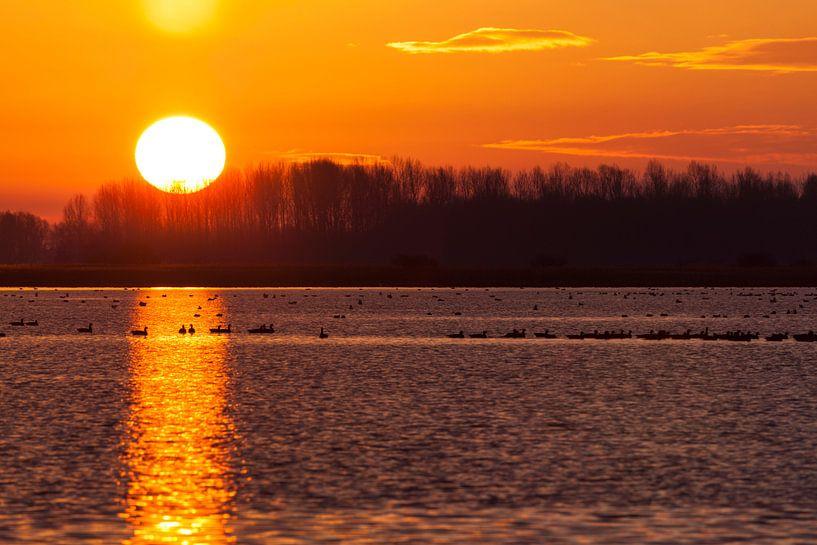 Goldene Sonne auf dem Lauwersmeer von Ron ter Burg