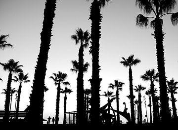 palmen op boulevard in zwart/ wit van Bert Bouwmeester