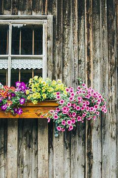 Bloemen op Houten Huis van Patrycja Polechonska