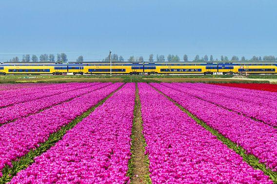 Tulpen en de trein