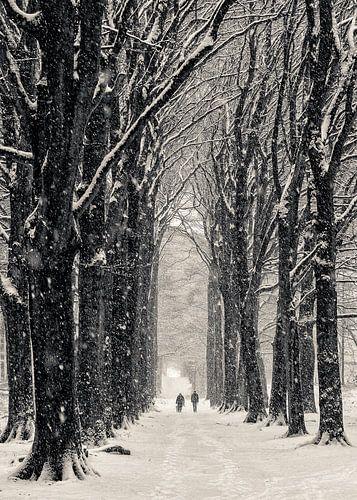 Winterlaan von Peter Vruggink