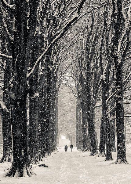 Winterlaan van Peter Vruggink