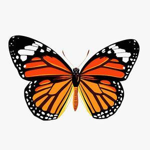 Schmetterling - orange
