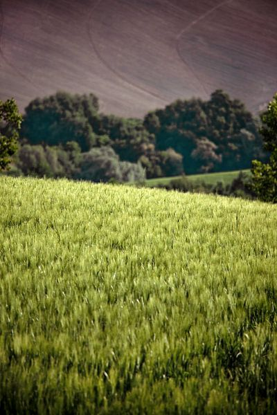 Korenveld van Nanouk el Gamal - Wijchers (Photonook)