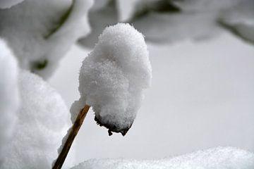 Schneehut von FotoGraaG Hanneke