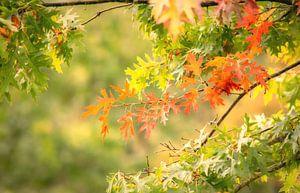 Herfst is gekomen van Tashina van Zwam