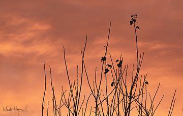 Simple Sunset van Nicole Harren