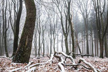 Winterlicher Wald von Tristan Lavender