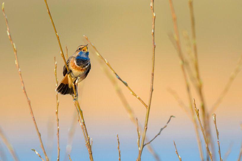 The sound of spring van Richard Guijt Photography