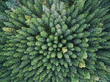 Finnish Forest van Lars Scheve