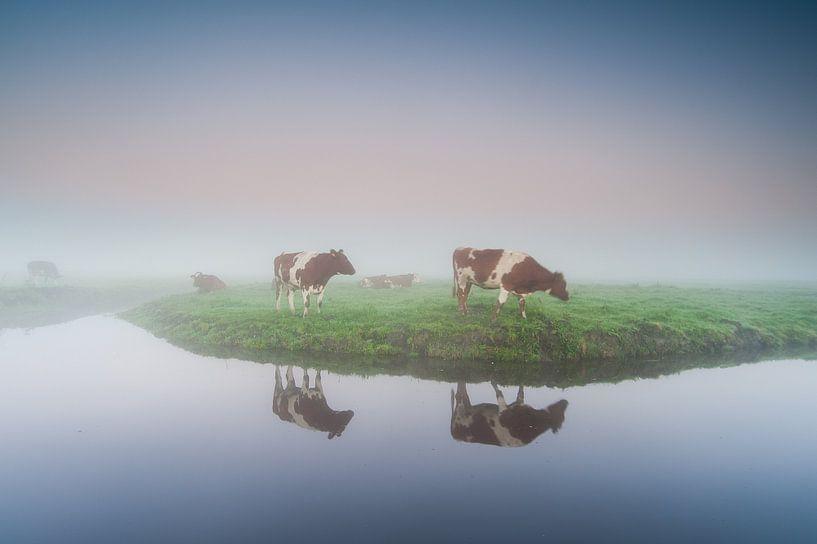 koeien in de Eempolder bij Eemnes van Arjan Keers