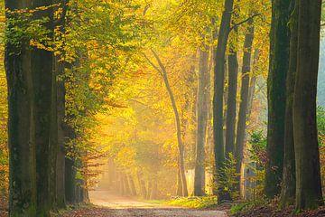 Ochtendgloren in het bos. van Francis Dost