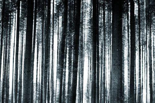 Abstracte boomstammen in zwart wit