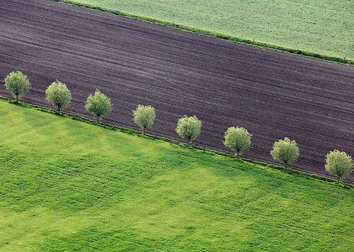 Enkele bomenrij van