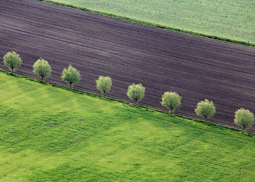 Enkele bomenrij van Ludo Verhoeven