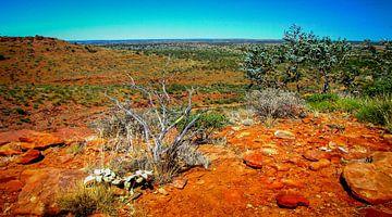 Uitzicht over de vallei in Watarrka Nationaal Park, Australie van
