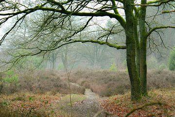 Wintertag auf der Heide von Tania Perneel