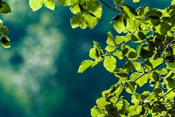 De zon schijnt door de bladeren in het bos van Veerle Verhoeven