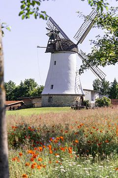 Mühle im Mohnblumenfeld von Kurt Krause
