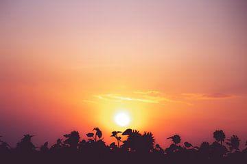 Sonnenuntergang mit Sonnenblumen von Nicky Kapel