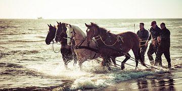 Paarden in de branding van Evert Jan Kip