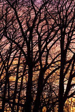 bomen -silhouet van Klaartje Majoor