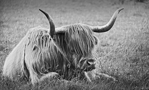 impressions of scotland - the highlander