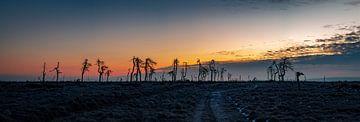 Skelett-Bäume Pano von Stefan Bauwens Photography