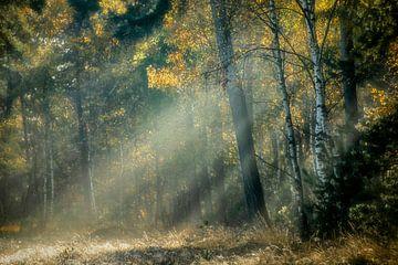 Sonnenharfen in einem Märchenwald von Francis Dost
