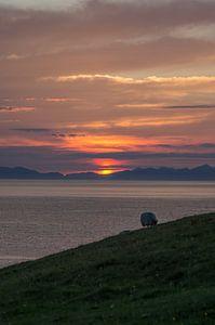 Zonsondergang met een schaap