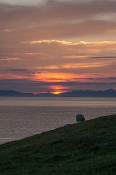 Zonsondergang met een schaap sur Andrea Ooms