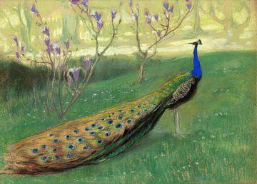Kazimierz Stabrowski~Peacock.
